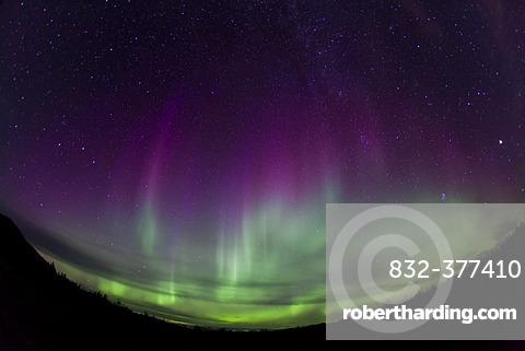 Curtains of Northern lights, Polar Aurorae, Aurora Borealis, green, pink, purple, near Whitehorse, Yukon Territory, Canada