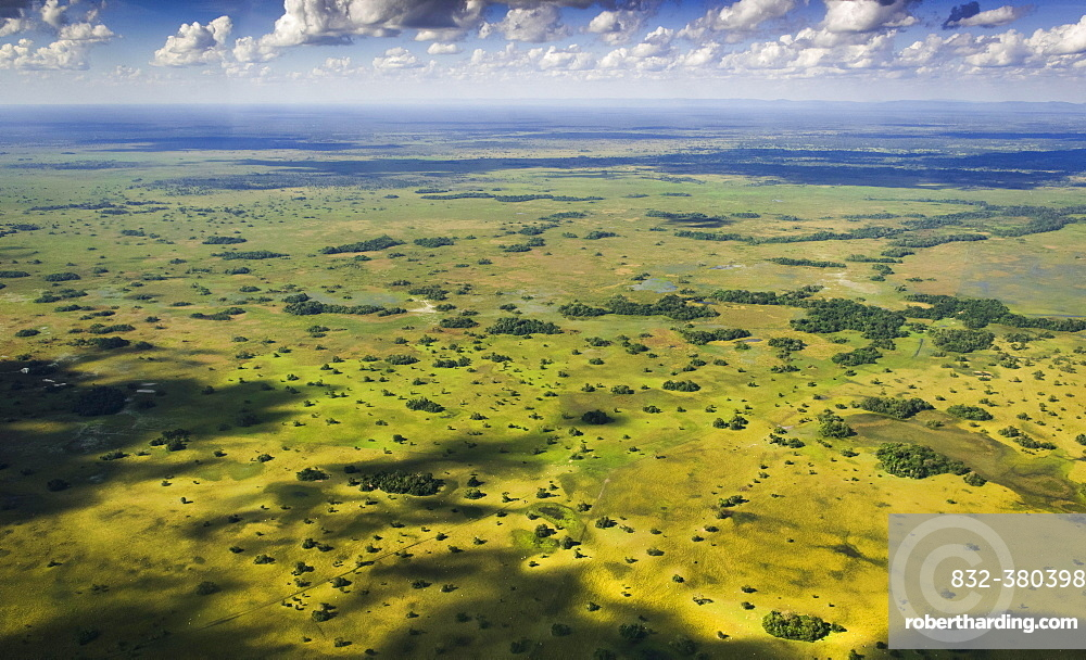 Natural pastures, Southern Pantanal, Mato Grosso do Sul, Brazil, South America