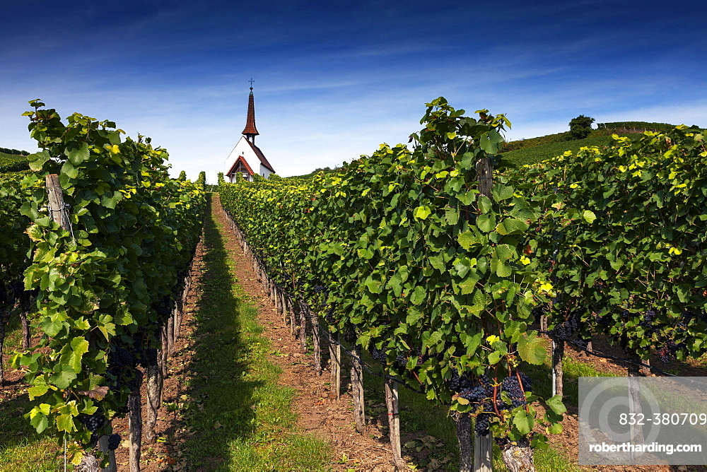 Eichert Chapel in the vineyards, Jechtingen, Kaiserstuhl, Baden-Württemberg, Germany, Europe