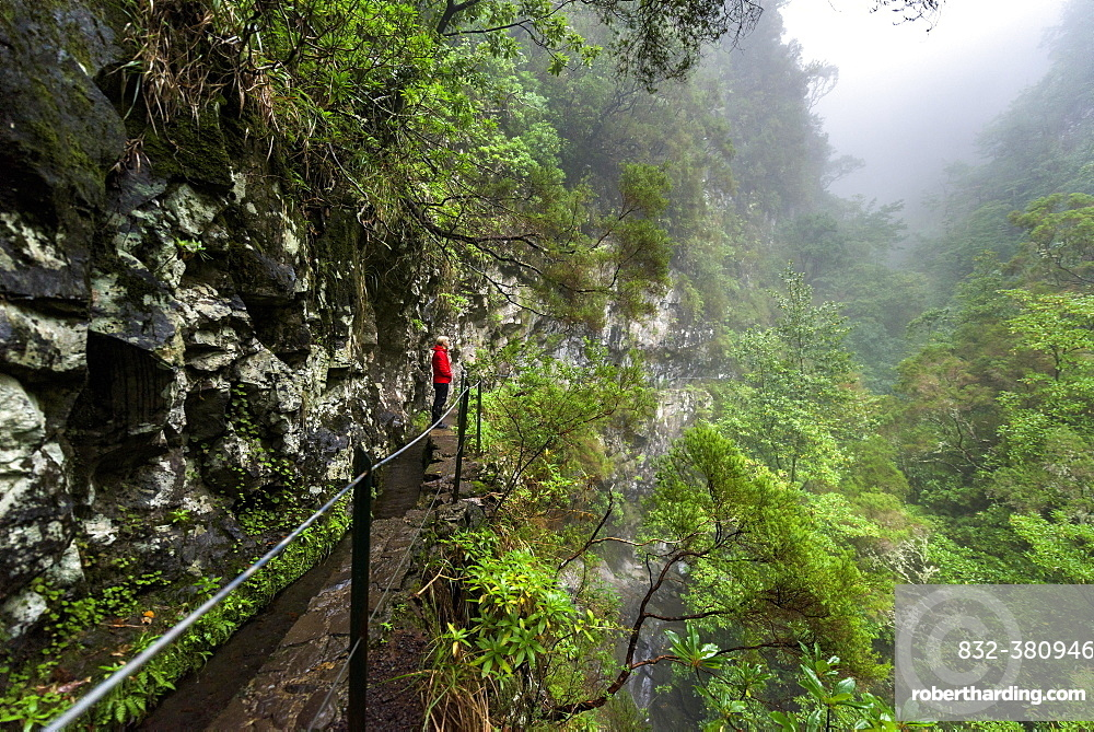 Hikers on narrow footpath along a Levada watercourse, rainforest in fog, Caldeirao Verde, Queimadas, Madeira, Portugal, Europe