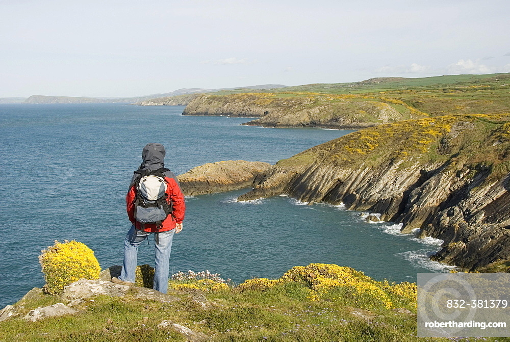 Hiker looking out over the coast, sea, lookout point, Pembrokeshire National Park, Wales, United Kingdom, Europe