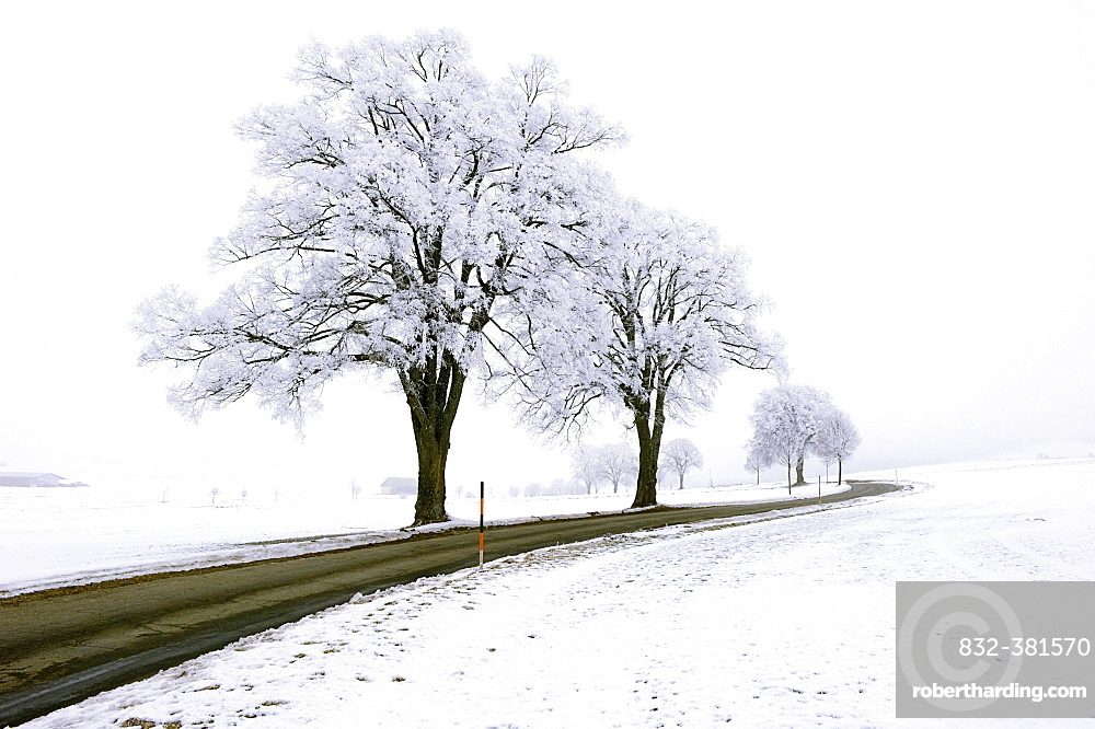 Frost-covered trees along the roadside, Germany, Europe