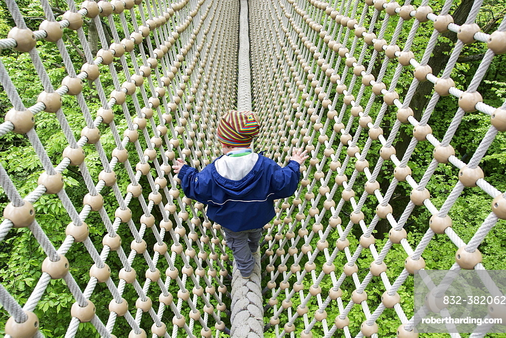 Toddler, 3 years, walking over a secured rope above treetops, Hainich Tree Top Walk, Hainich National Park, Thuringia, Germany, Europe