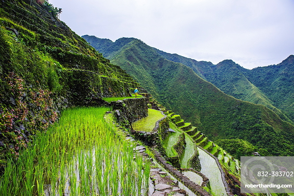 Batad rice terraces, part of the world heritage sight Banaue, Luzon, Philippines, Asia