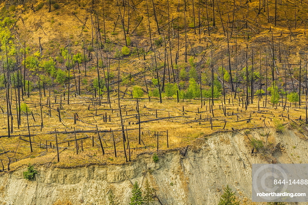 View of barron land following recent fire near Kamloops, British Columbia, Canada, North America