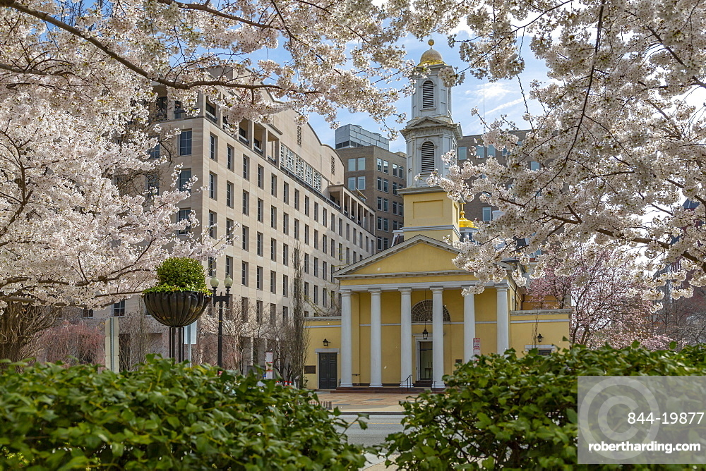 View of the St John's Episcopal Church and spring blossom, Washington D.C., United States of America, North America