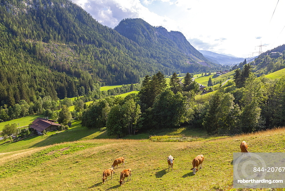 View of mountains and cattle near Schladming, Schladming, Styria, Austrian Tyrol, Austria, Europe