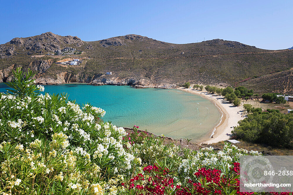 View over Psili Ammos beach with oleander on island's east coast, Serifos, Cyclades, Aegean Sea, Greek Islands, Greece, Europe