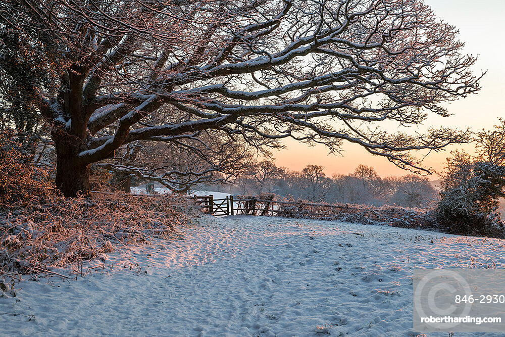 Snow covered High Weald landscape at sunrise, Burwash, East Sussex, England, United Kingdom, Europe