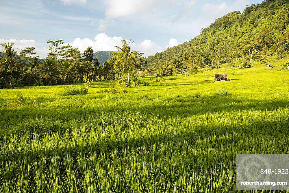 Landscape near Sidemen, Bali, Indonesia, Southeast Asia, Asia