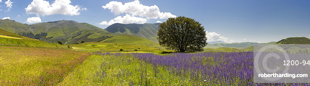 Wildflower meadows in the Monte Sibillini National Park, Umbria, Italy, Europe