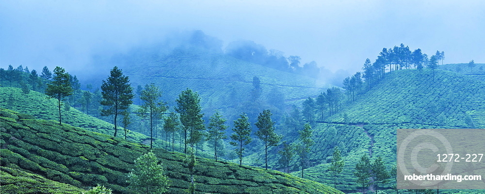 Munnar, Western Ghats Mountains, Kerala, India, Asia