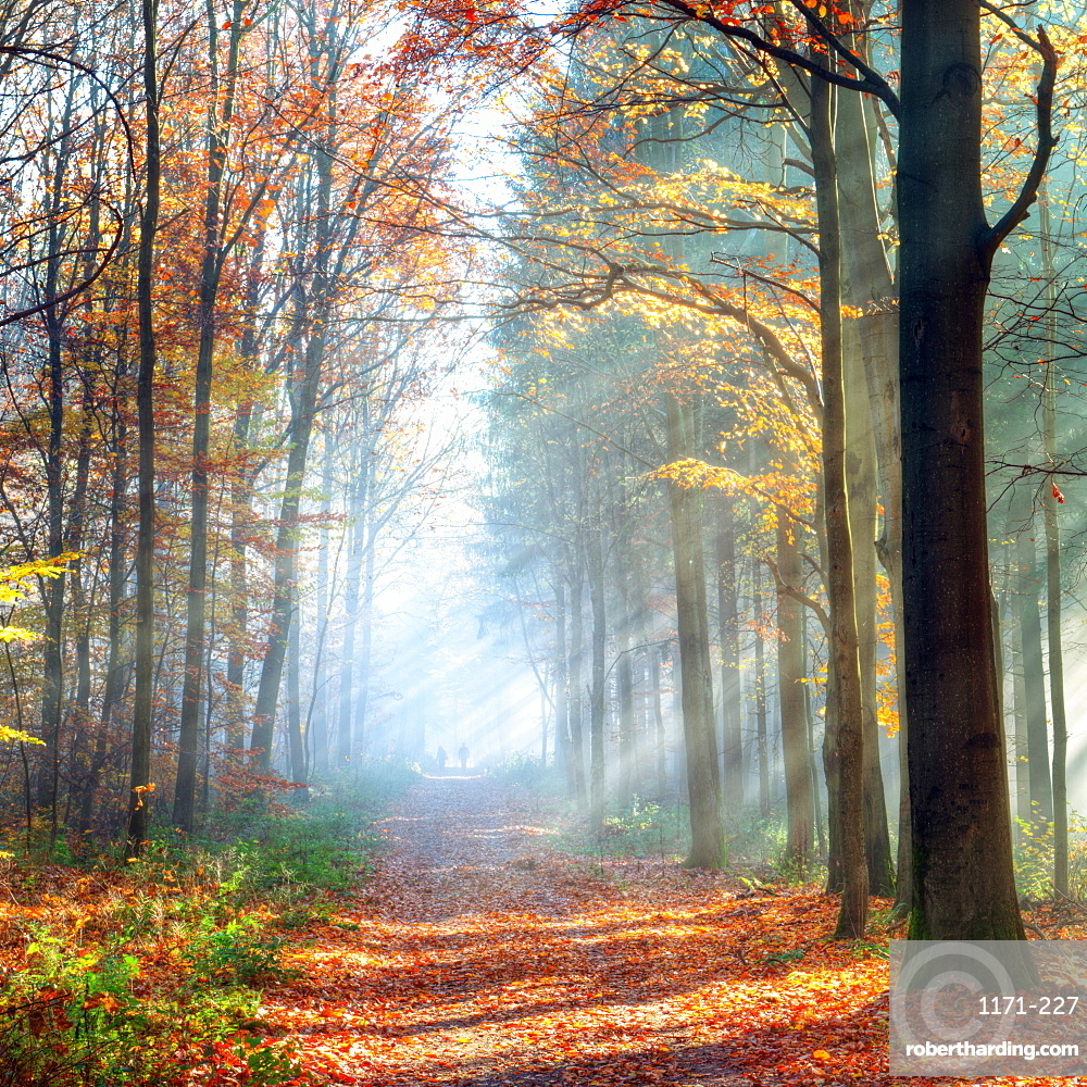 Enchanted autumn forest scene in Germany, Baden-Wurttemberg, Germany, Europe