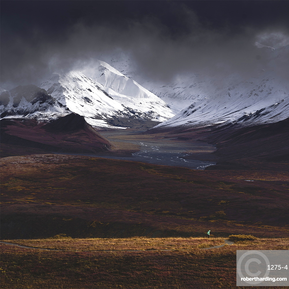 Hiker illuminated by a beam of sunlight after snowfall in the Denali National Park, Alaska, United States of America, North America