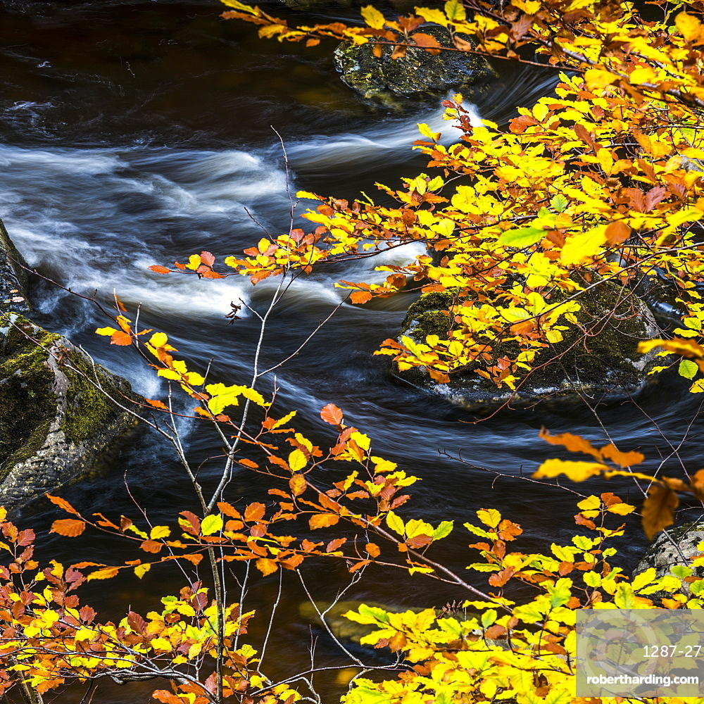 Autumn at the Hermitage on the River Braan near Dunkeld in Perthshire, Scotland, United Kingdom, Europe