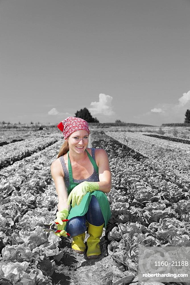 Female farmer picking lettuce (Lactuca sativa), Esslingen, Baden Wurttemberg, Germany