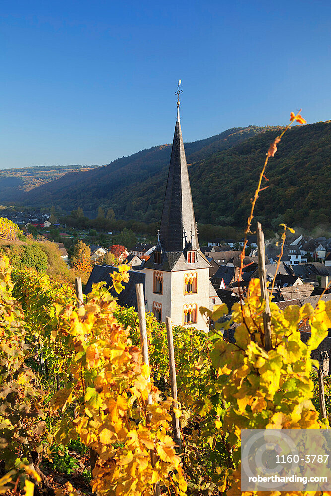 Church tower and vineyards in autumn, Ediger-Eller, Moselle Valley, Rhineland-Palatinate, Germany, Europe