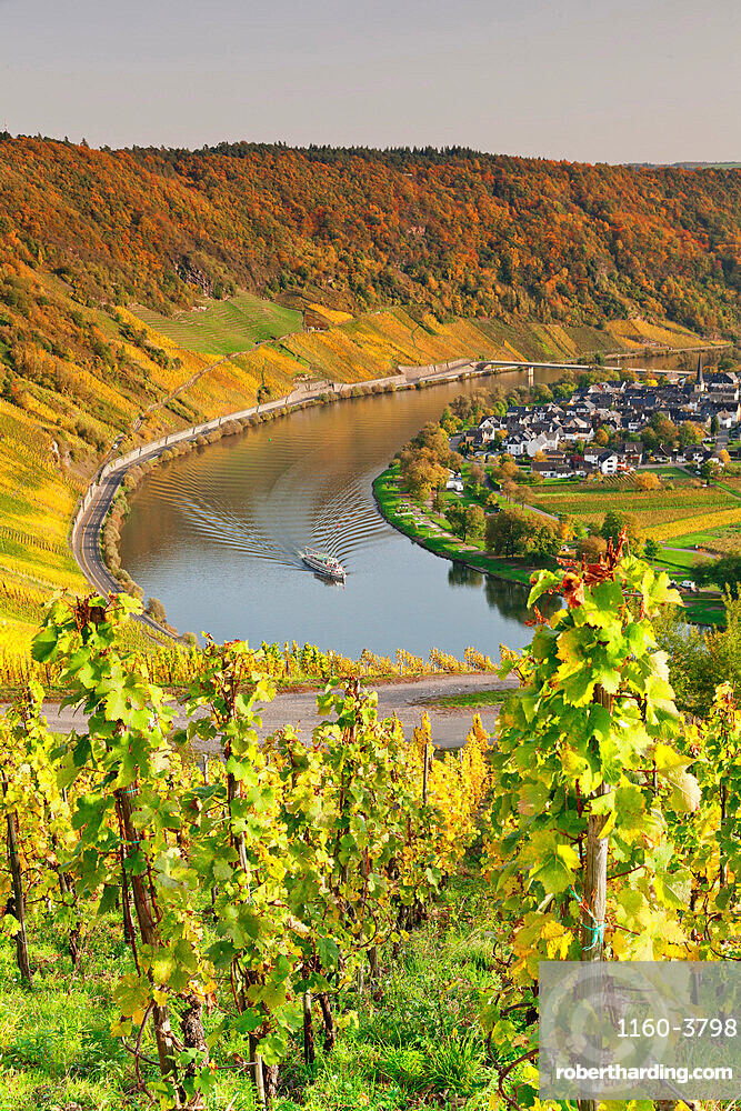 Loop of Moselle River near the town of Kroev, Rhineland-Palatinate, Germany, Europe