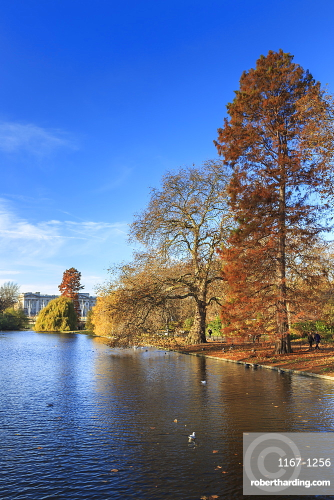 St. James's Park, with view across lake to Buckingham Palace, sunny late autumn, Whitehall, London, England, United Kingdom, Europe