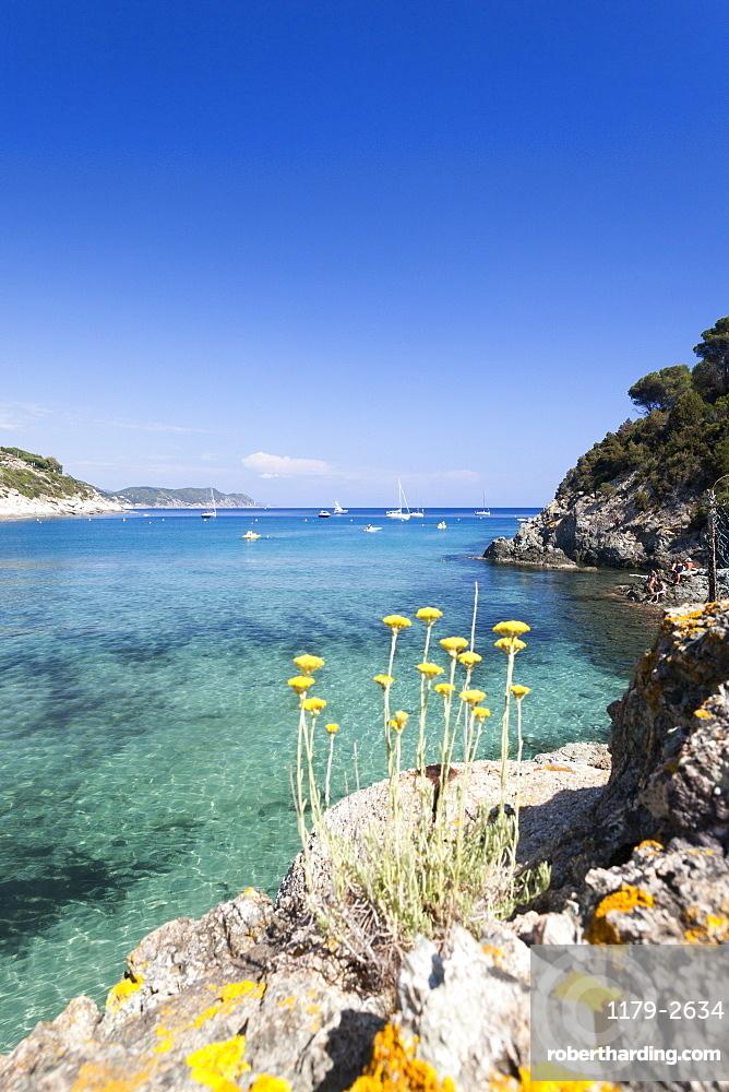 Wild flowers, Fetovaia Beach, Campo nell'Elba, Elba Island, Livorno Province, Tuscany, Italy, Europe