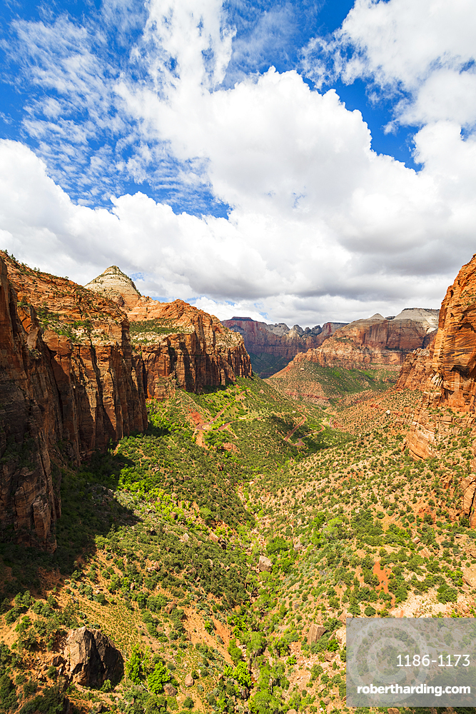 Canyon overlook, Zion National Park, Utah, United States of America, North America