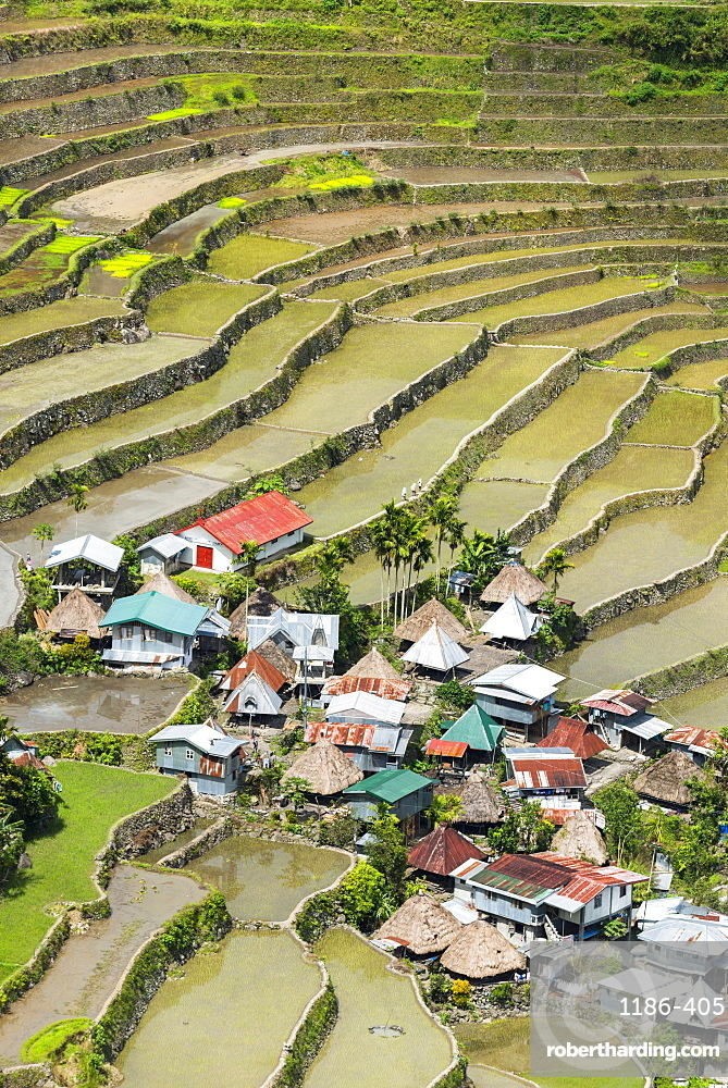 Asia, South East Asia, Philippines, Luzon, Batad