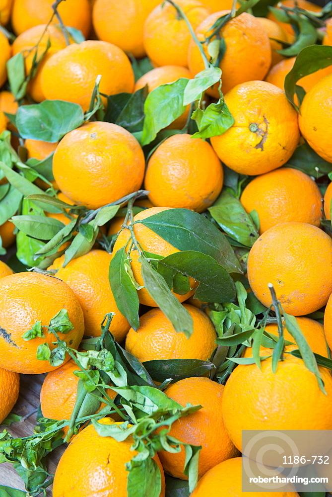 Oranges Aix en Provence, Bouches du Rhone France