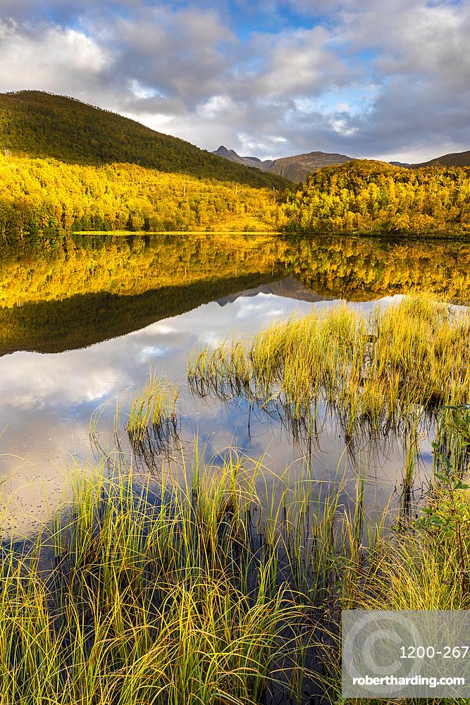 Lake reflection, autumn colour, Senja, Norway.