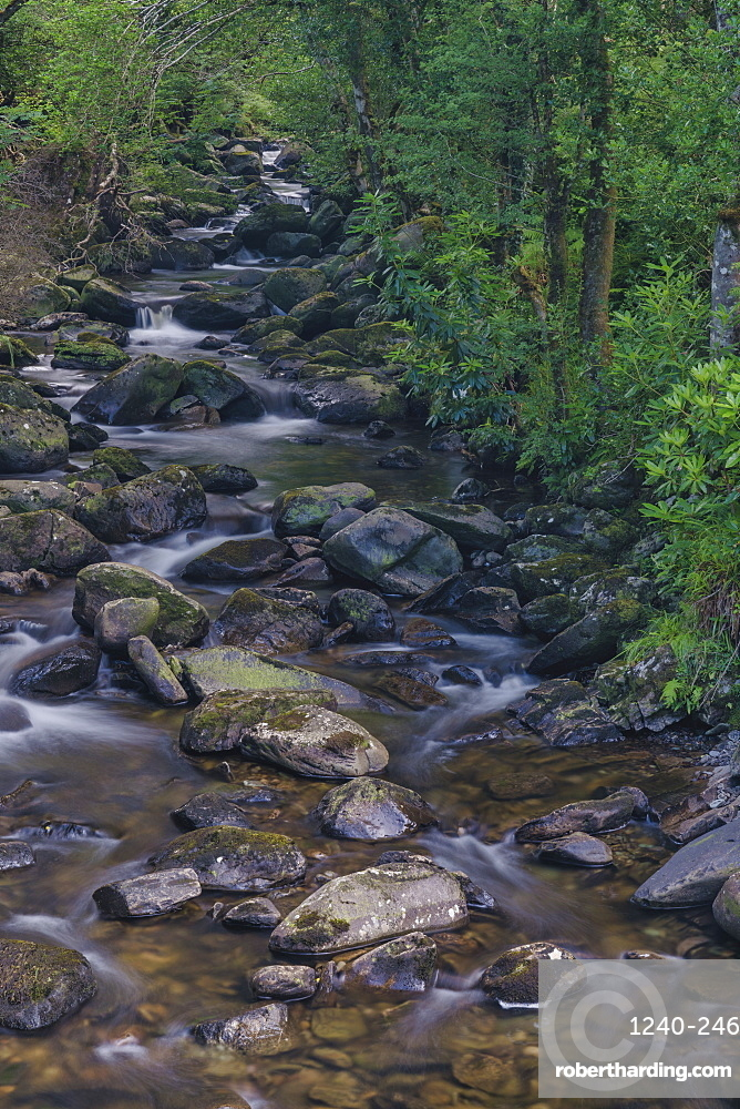 Owengarriff River, Killarney National Park, County Kerry, Munster, Republic of Ireland, Europe