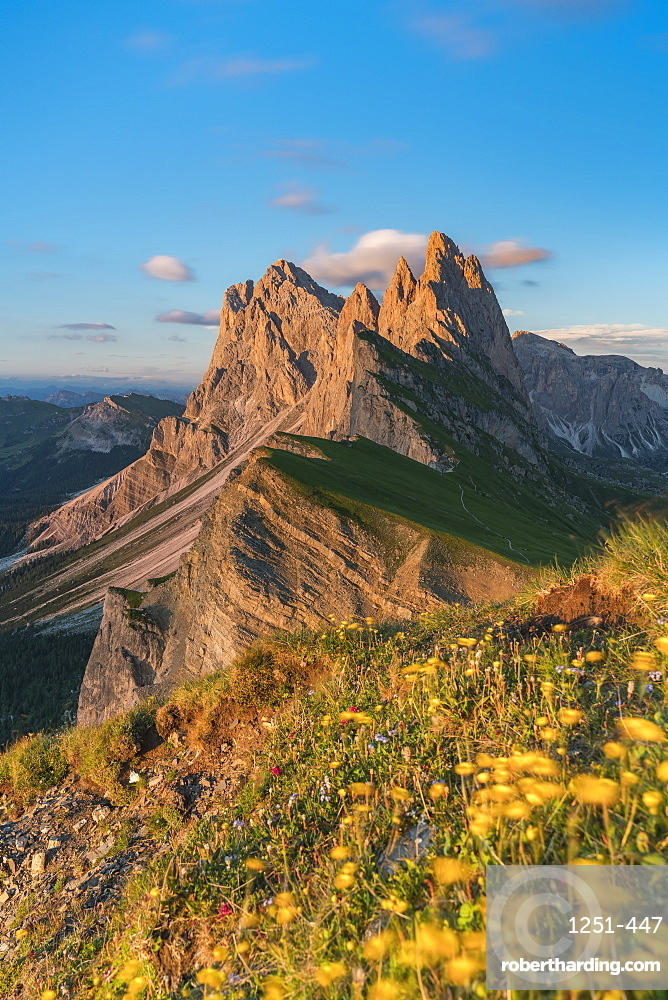 Seceda group with Globeflowers in the foreground in summer at dusk. Ortisei, Bolzano province, Trentino Alto Adige, Italy.