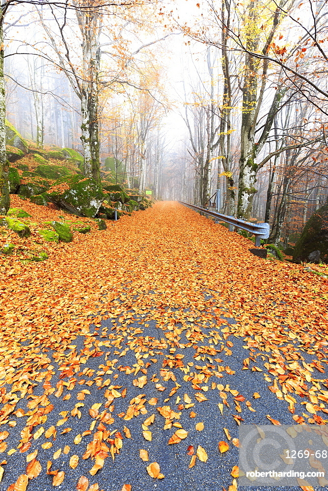 Leaves on the road through | Stock Photo