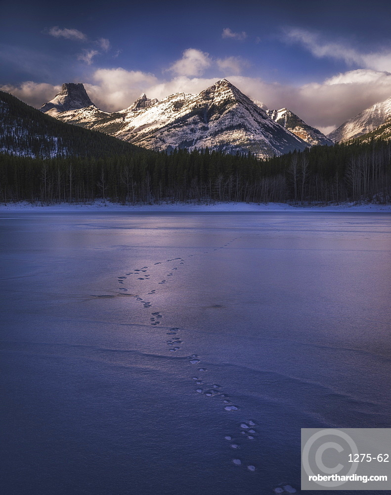 Winter Landscape of the Canadian Rockies at Wedge Pond - tracks of wildlife on frozen lake - Kananaskis, Alberta, Canada