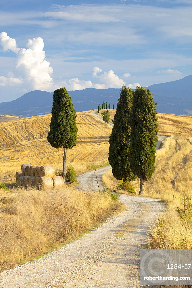Cypress trees and fields in the afternoon sun at Agriturismo Terrapille (Gladiator Villa) near Pienza in Tuscany, Italy