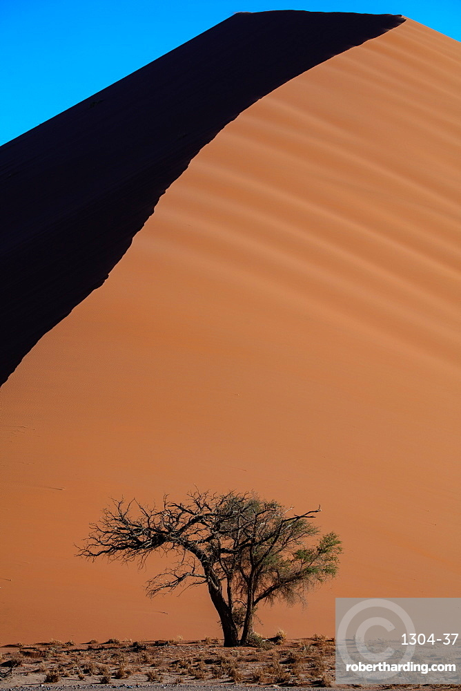 Sossusvlei National Park, Sunset at Dune along the main highway to Deadvlei, Namibia. Shot in late summer 2019.