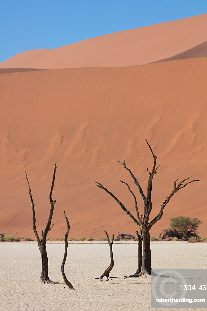 900 year old dead trees within Deadvlei