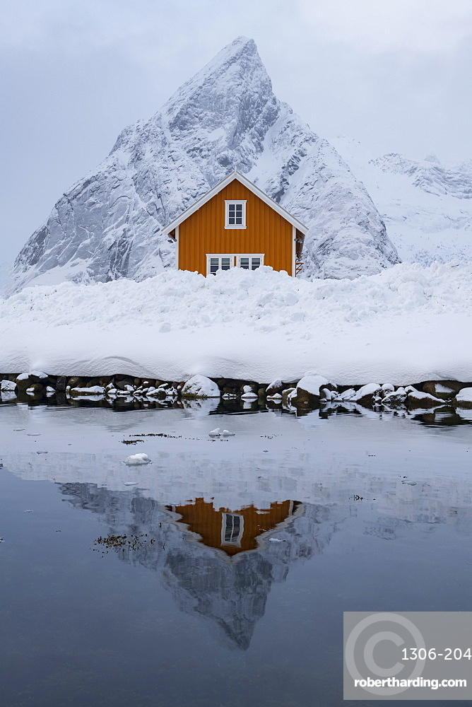Yellow rorbuer hut reflected in winter, Sakrisoy, Moskenesoya, Lofoten Islands, Nordland, Arctic, Norway, Europe