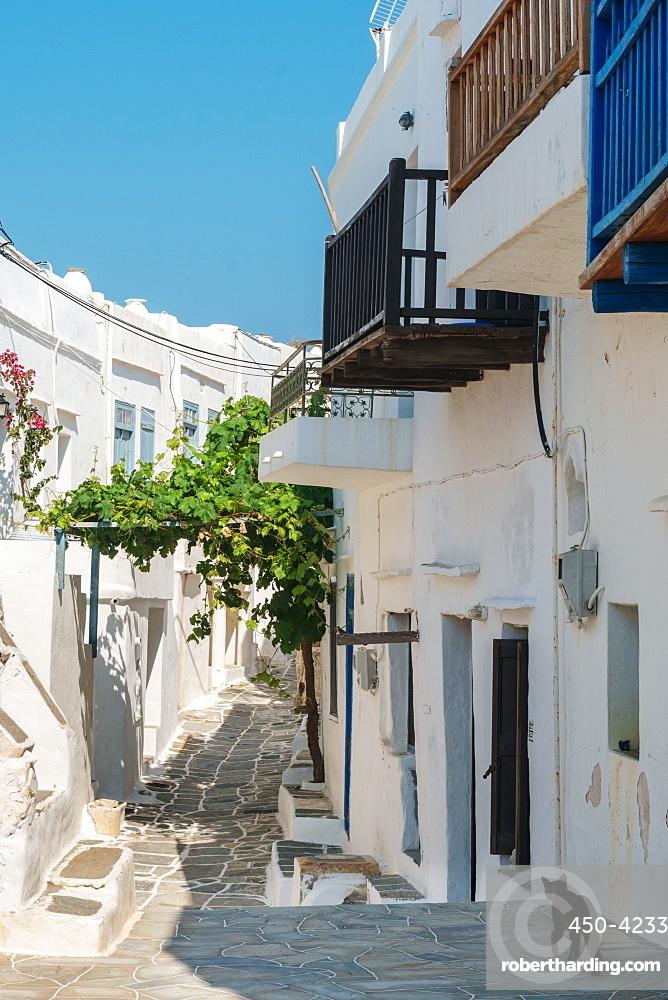 Black cat wandering down an alleyway through traditional white Greek houses, Kastro Village, Sifnos, Cyclades, Greek Islands, Greece, Europe