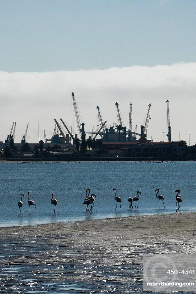 Great Flamingos at the water's edge with the cranes of the port in the background, the Wetlands, Walvis Bay, Namibia, Africa