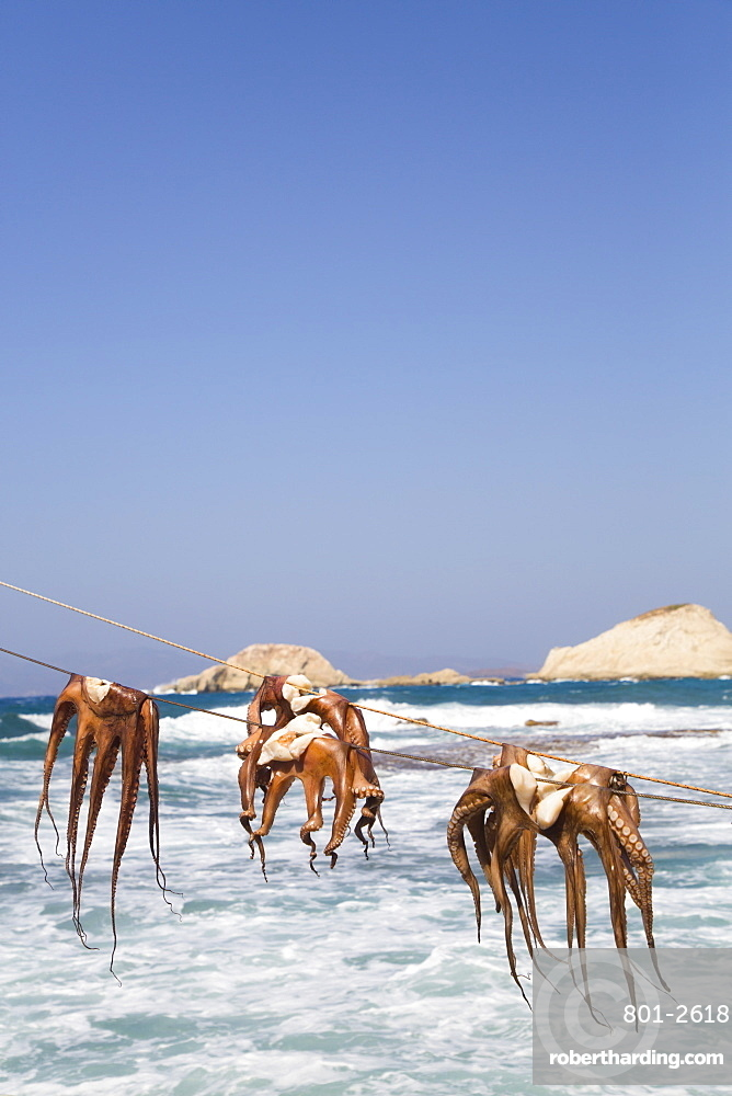 Drying Octopus, Mandrakia Village, Milos Island, Cyclades Group, Greece
