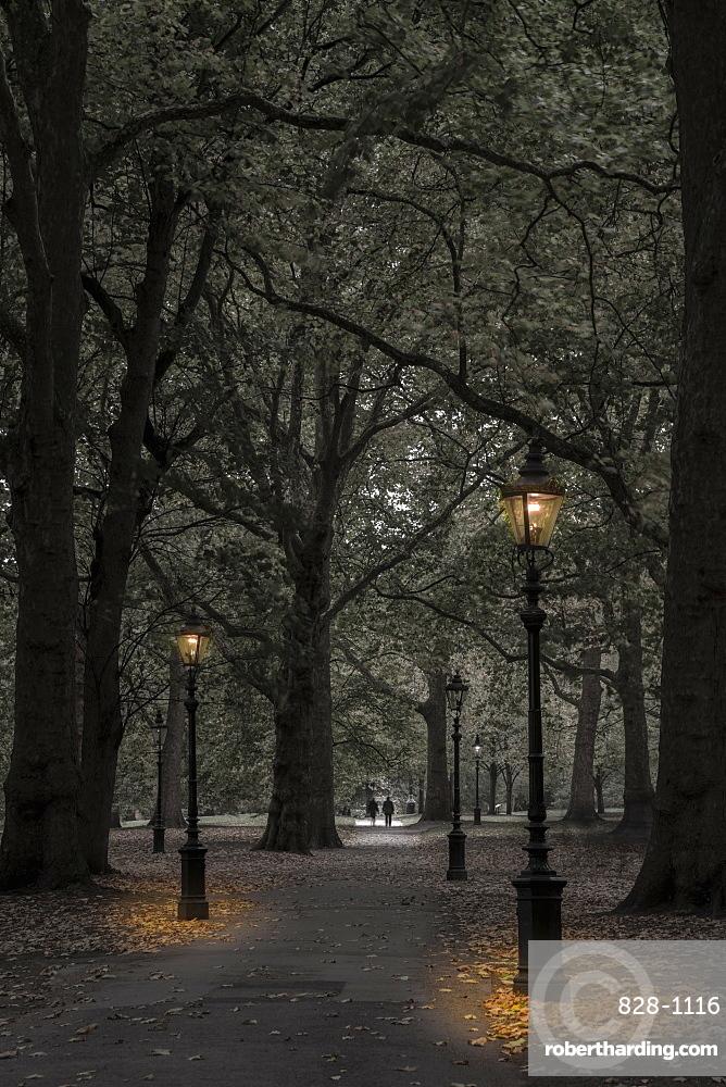 Green Park at dusk, Westminster, London, England, United Kingdom, Europe