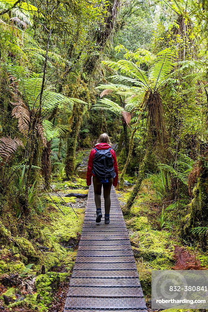 Hiker on walk through rainforest on Lake Matheson, Fox Glacier, West Coast, Southland, New Zealand, Oceania