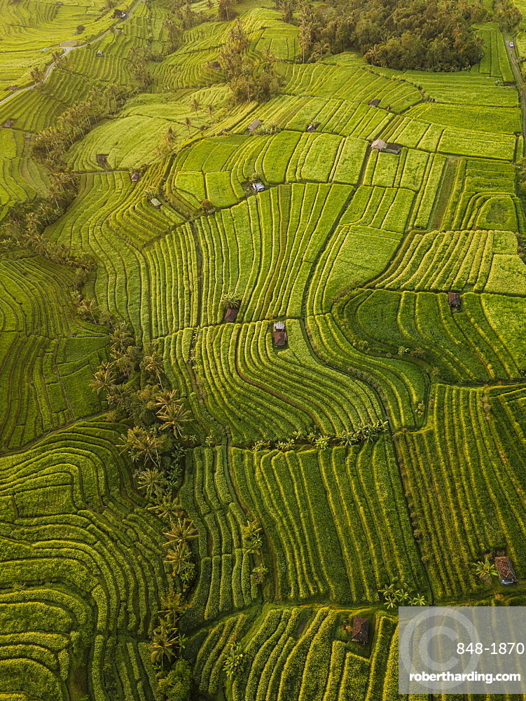 Aerial view of Jatiluwih Rice Terraces, Tabanan, Bali, Indonesia, Southeast Asia, Asia