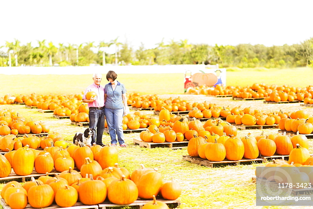 Portrait of couple standing in pumpkin patch, Jupiter, Florida