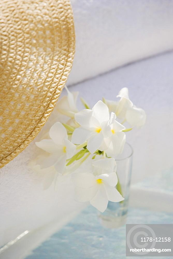 Tropical flowers in
