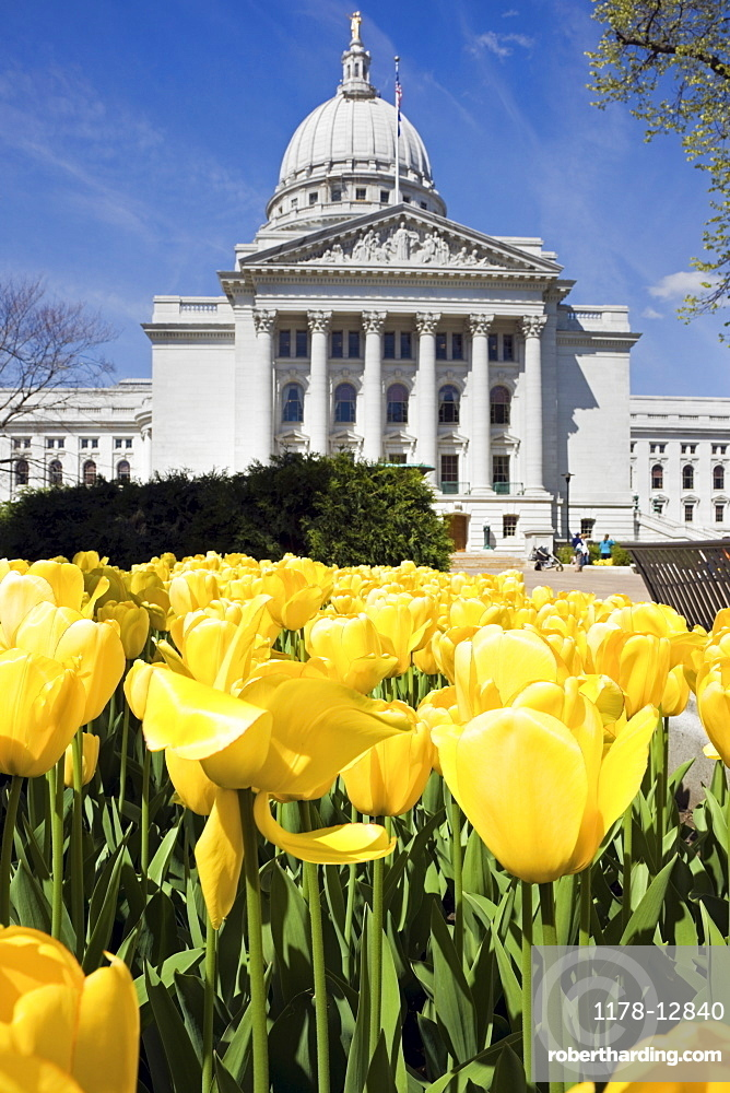 Yellow tulips outside State Capitol building