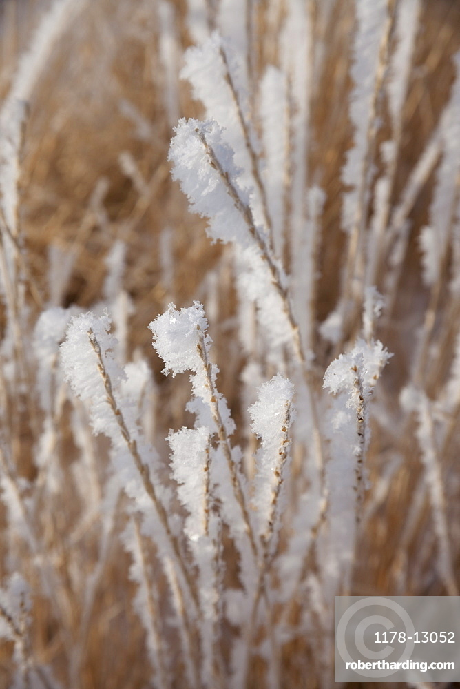 Frost on grass