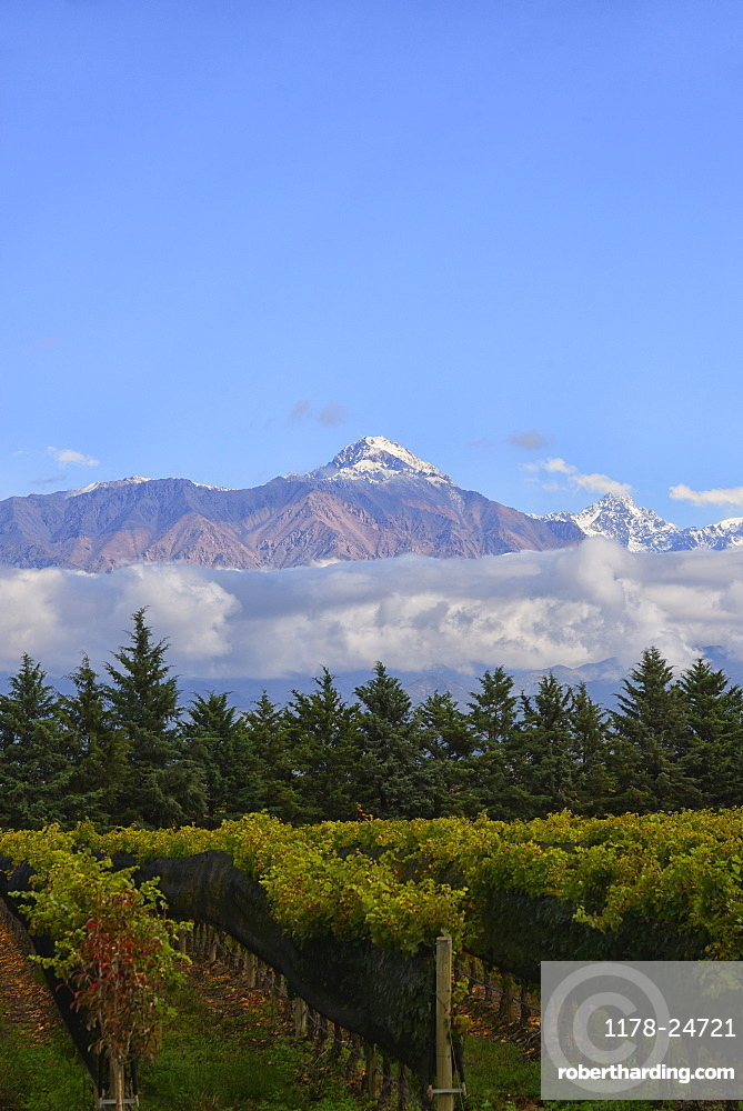 View of vineyard with mountain on background, Andes, Mendoza Argentina