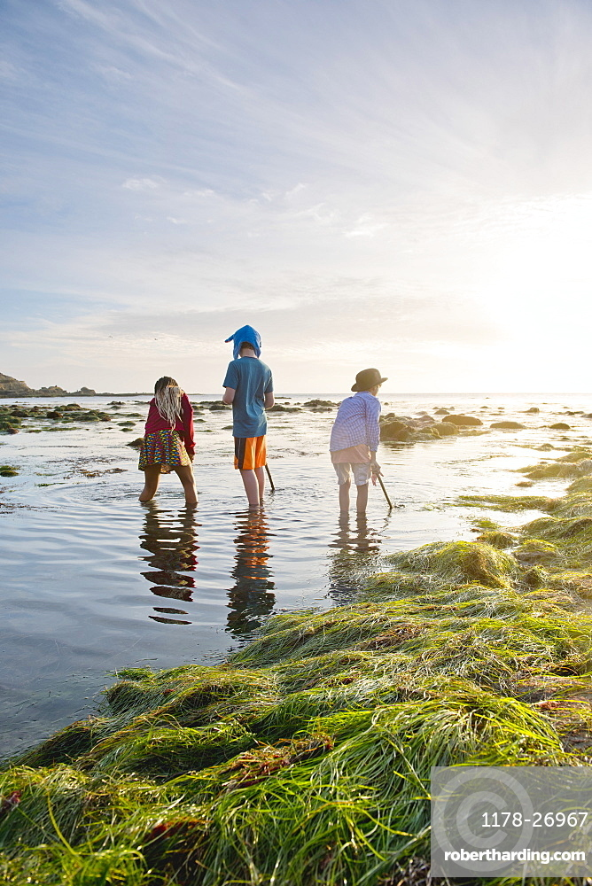 Children exploring tide pools in La Jolla, California