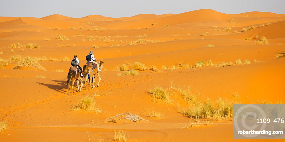 Tourist couple on a camel ride in Erg Chebbi Desert, Sahara Desert near Merzouga, Morocco, North Africa, Africa