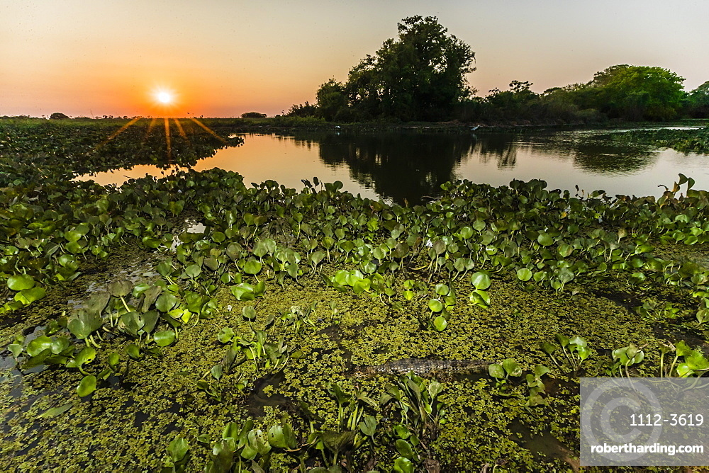 Sunset over water at Pouso Alegre Fazenda, Mato Grosso, Pantanal, Brazil, South America